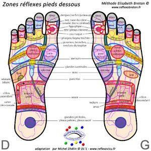 cartographie des pieds reflexologie plantaire